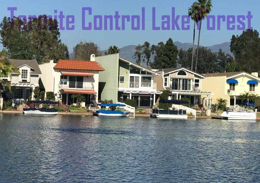 Termite Control Lake Forest