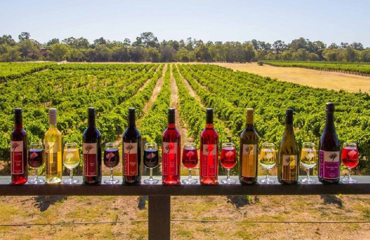 wine tours swan valley